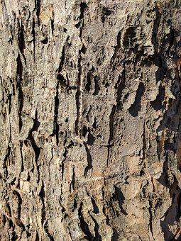 Bark, Tree Bark, Tree, Wood, Nature, Effect