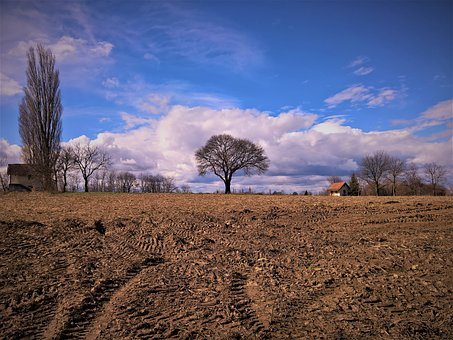 Landscape, Trees, Sky, Clouds, Spring In Air