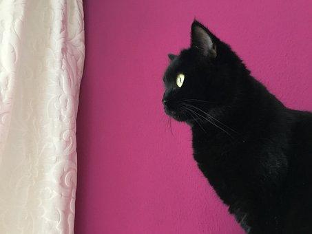 Cat, Black, Animal, Domestic Cat, Mieze, Luck