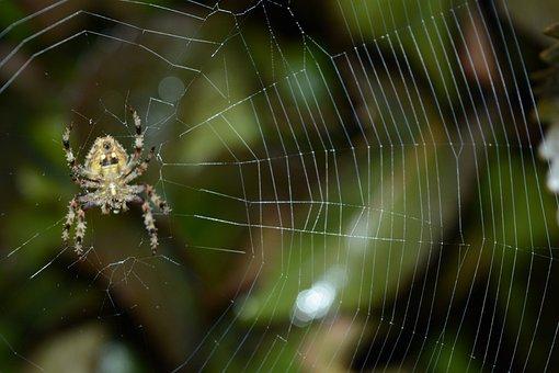 Nature Photography, Macro Photography, Macro, Nature