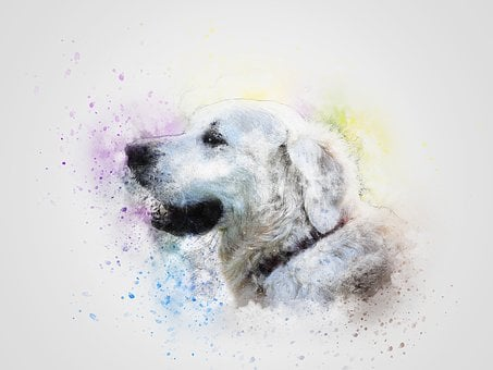 Dog, Pet, White, Art, Abstract, Retriever, Vintage