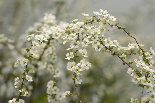Bird's Flowers, Plant, Spring Equinox