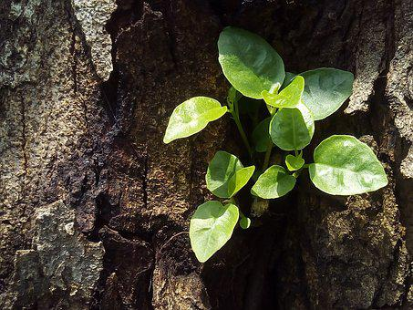 Tree, Sapling, The Amount Of The Light, Plant, Growth