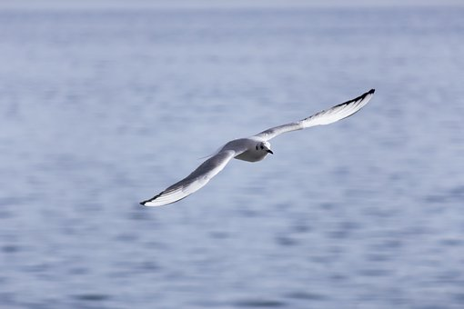 Bird, Nature, Wildlife, Animal, Wild, Wing, Feather
