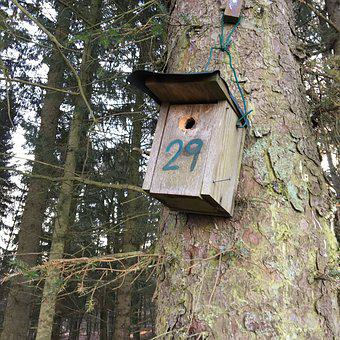 Birds House, Aviary, 29, Number, Tree, Forest, Prime