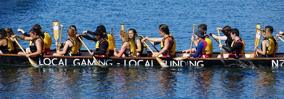Dragon Boat, Boat Race, New Zealand, Paddle