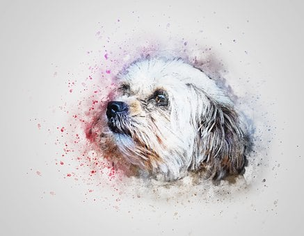Dog, Pet, Cute, White, Art, Abstract, Vintage, Design