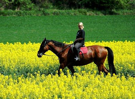 Drive, Woman, Horse, Peace, Field, Relax, Scene, Rest