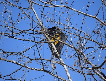 Kite In Tree, Kite, Tree, Batman Kite, Kite-eating Tree