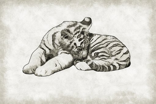 Tiger, Cub, Cute, Wild, Wildlife, Baby, Cat, Mammal