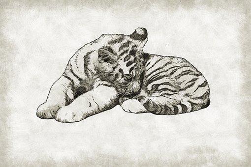 Tiger, Cub, Cute, Wild, Wildlife, Baby, Cat, Mammal