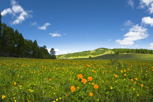 Spring, Flowers, Meadow, Buttercup, Sunny, Paradise