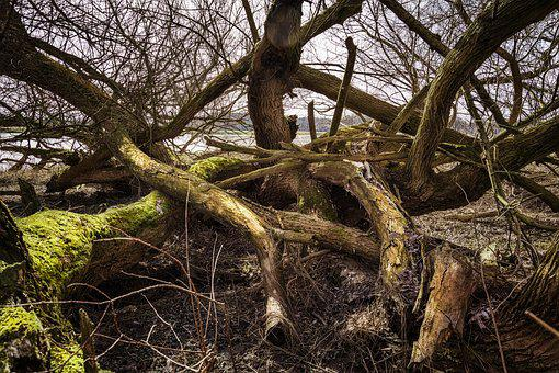Elbe, Elbufer, River, Nature, Tree, Wood, Drift Wood