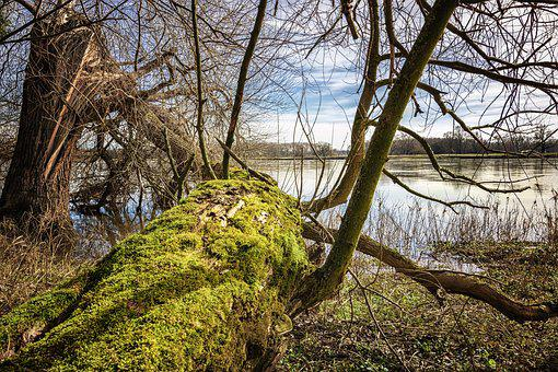 Elbe, Elbufer, River, Nature, Tree, Wood, Water