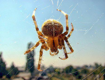 Spider, Insects, Nature, Wildlife, Fear, Scary