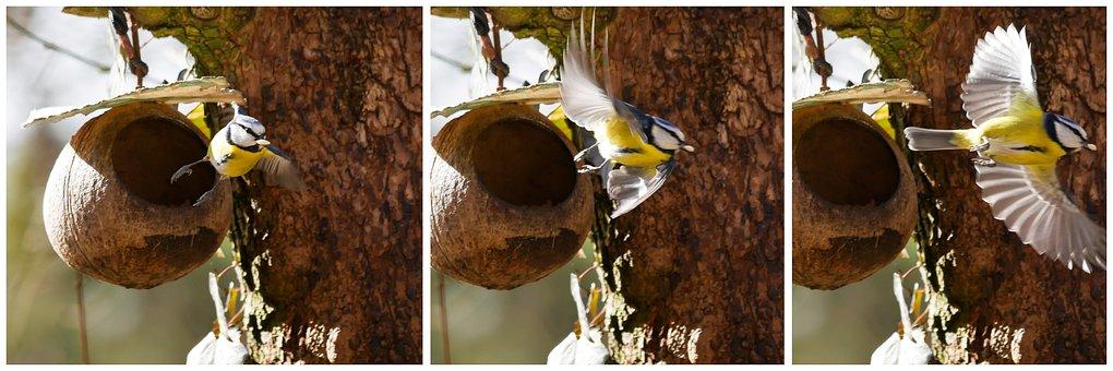 Animal, Bird, Tit, Blue Tit, Feeding Station, Fly, Wing