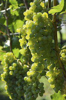 Wine, Grapevine, Vine, Grapes, Vineyards, Vines, Grape
