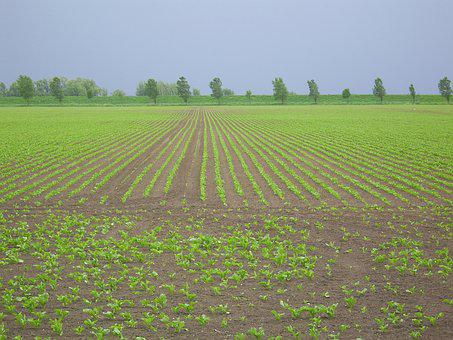 Arable Land, Diagonal Worth, Young Plantations