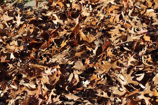 Falling Leaf, Autumn, Natural