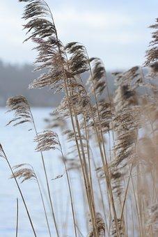 Autumnalis, Background, Baltic, Beach, Coastlin, E Day