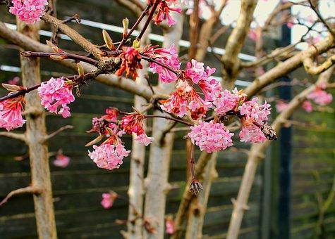 Forårsgren, Flowers, Branch, Have, Beautiful, Spring