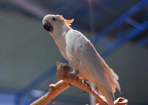 Parrot, Cockatoo, Bird, Zoo, Beasts, Cage, Branch, Beak