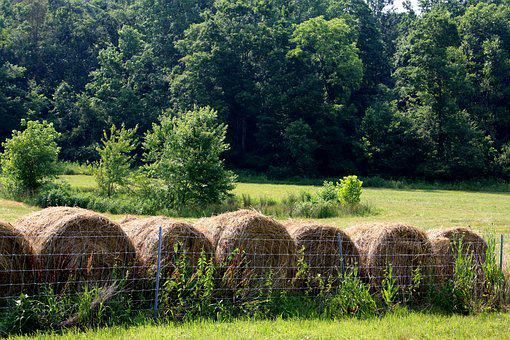 Hay, Bales, Meadow, Summer, Farm, Field, Agriculture