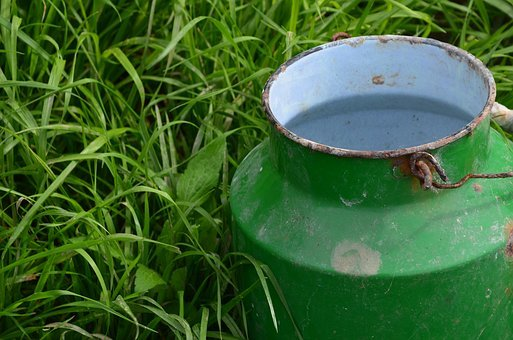 Bucket, Milking, Milk, Farm, Dairy, Food, White