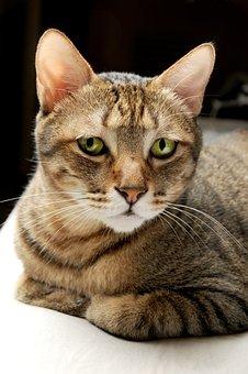 Cat, Pet, Cat Mia, Gel Reviews, Cuteness