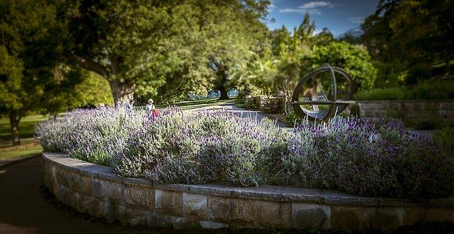 Lavender Garden, Therapeutic, Aromatherapy, Lavender