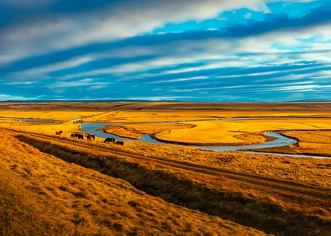 Iceland, Horses, Sky, Clouds, Landscape, Nature