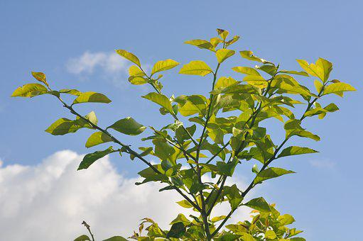 Leaves, Sky, Branch, Orangier