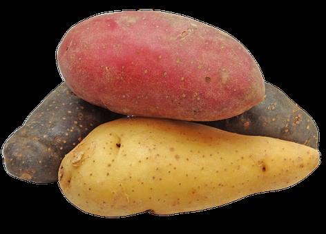 Potato, Fingerling, Rainbow, Potatoes, Png