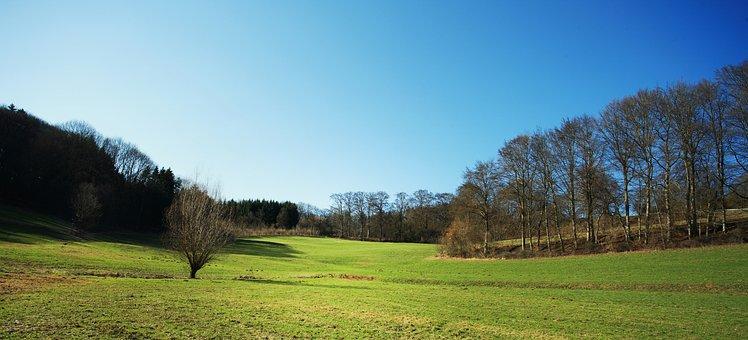 Landscape, Forest, Glade, Sky, Blue, Tree, Bavaria
