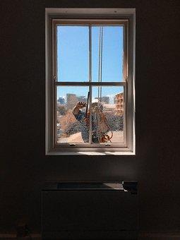 Window Cleaner, Window, Washer, Service, Occupation