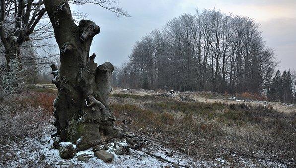 Tree, Lone Tree, Forest, Way, Beskids