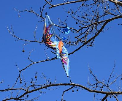 Kite In Tree, Kite, Tree, Bird Kite, Kite-eating Tree