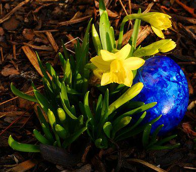 Tete A Tete, Narcissus, Egg, Easter, Yellow, Easter Egg