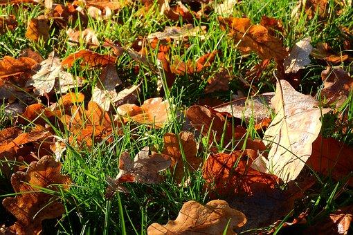 Fallen Leaves, Autumn, Autumn Colors, Golden Autumn