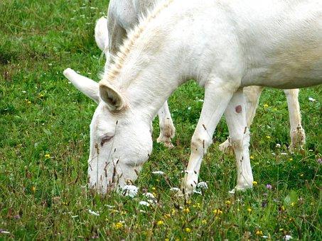 Wise Donkey, Donkey, Eat, Grass, Mammal, Animal