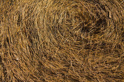 Hay, Bale, Agriculture, Farm, Straw, Harvest, Nature