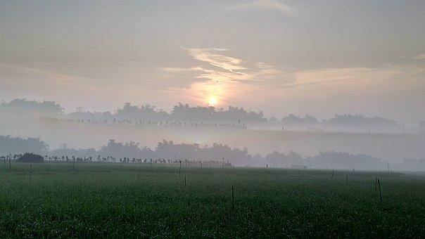 Rice Field, Sun Rise, Morning, Dew, Sun, Rice, Field