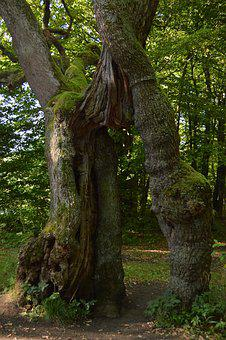 Bed Body, Natural Monument, Hainich, Places Of Interest