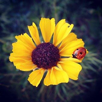 Flower, Yellow, Sunflower, Ladybug, Spring, Nature