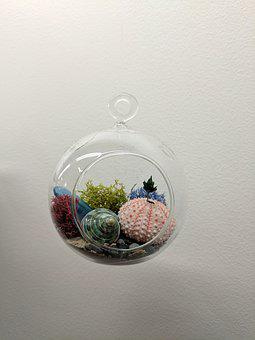 Terrarium, Plant, Succulent, Shell, Vegetation, Decor