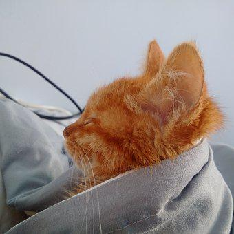 Cat, Year, Asleep