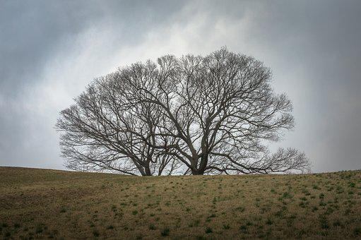 Wood, Field, Nature, Twig, Plants, Curve, Landscape