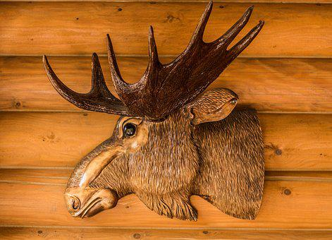 Deer, Head, Animal, The Horn Of Africa, Wild, View