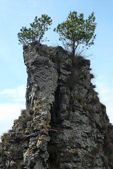 Rock, Pine, Cliff, Mountain Pine, Gerolstein, Eifel