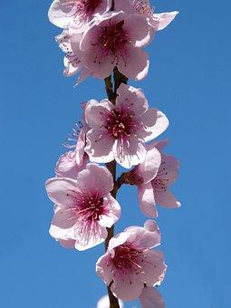 Fárbol Fruity, Flowering Tree, Flowery Branch